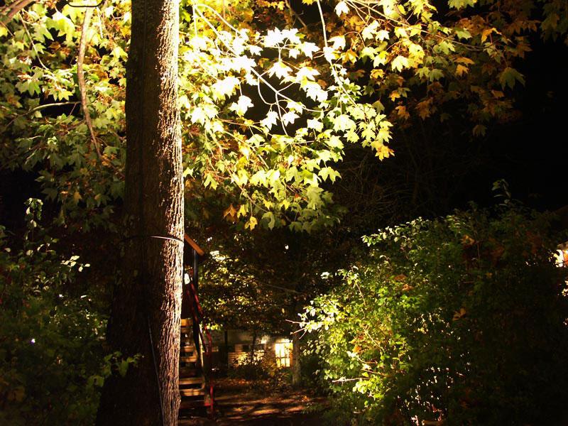 Ljus i mörkret Odla nu