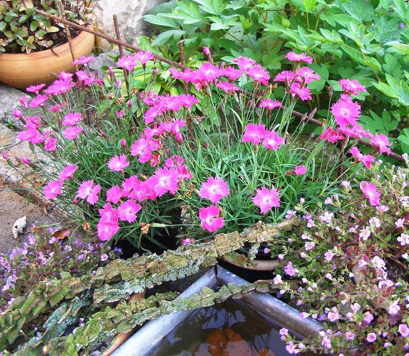 lättskötta växter utomhus