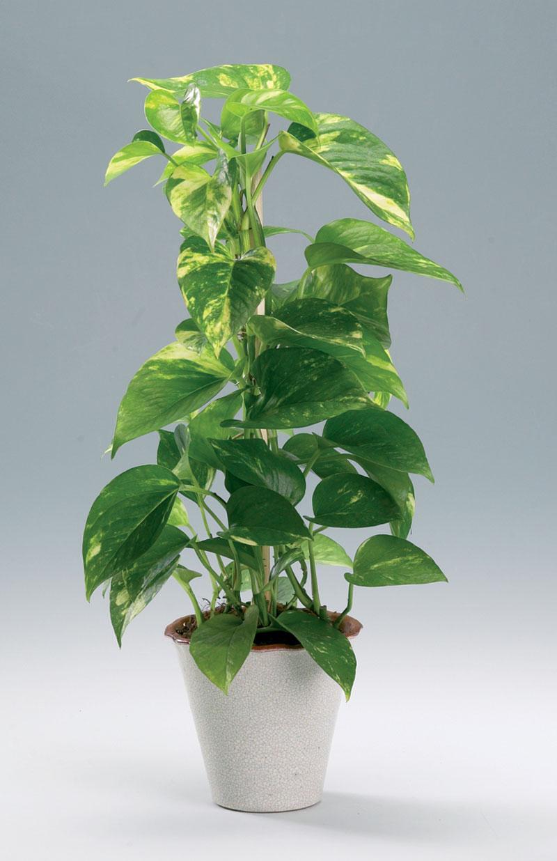 gröna växter bra luft