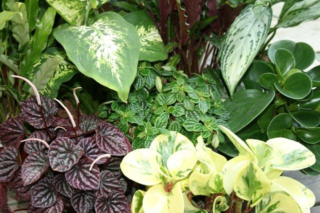 gröna växter trädgård