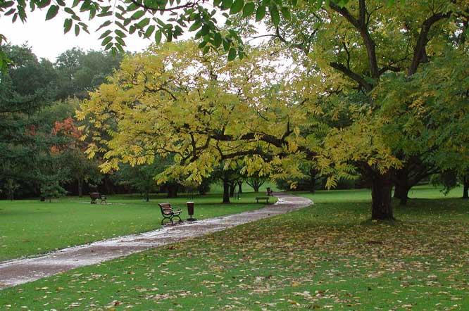 Snabbväxande träd, lövfällande Odla nu