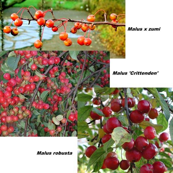 röda vilda bär