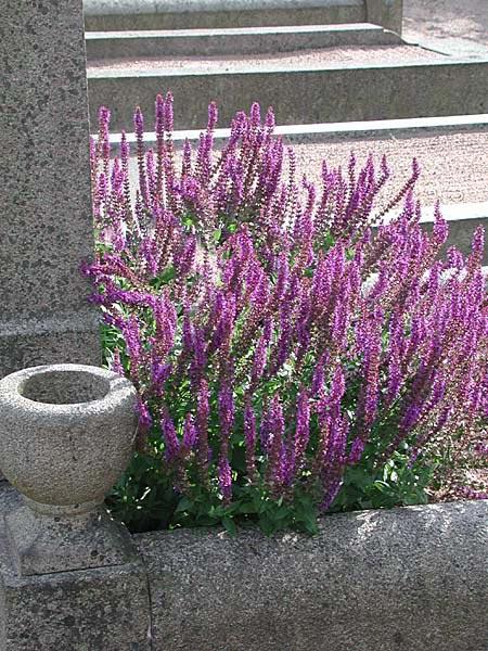 Växter till kyrkogården | Odla.nu