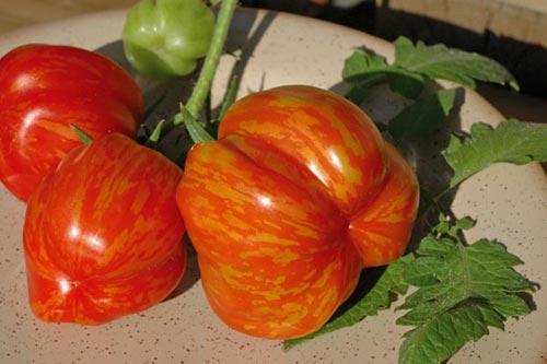 brandywine tomat frö
