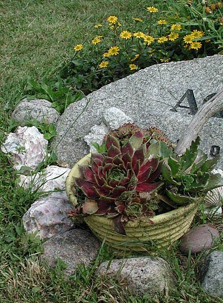 tåliga blommor på graven