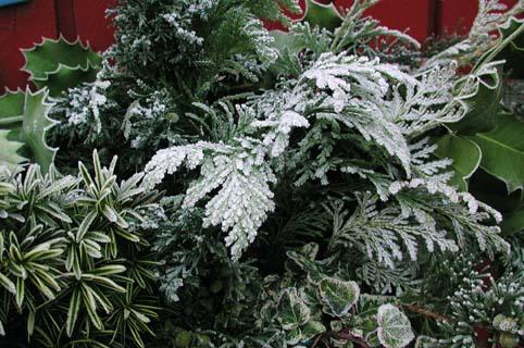 vintergröna träd buskar