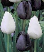 'Black & White'