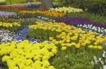 Blomstrande park