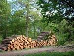 Bokskog på traven