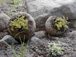 Hypertufa-bollar
