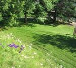 Branta slänter som en gång varit rabbater kan bli färgrika inslag i gräsmattan. Åkklipparen kan inte användas i dessa slänter.