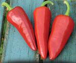 Chili Capsicum annuum 'Piment d'Espelette'