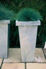 Tåtel, Corynephorus 'Spiky Blue'