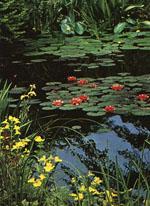 Något som blivit väldigt populärt de senaste åren är dammar i olika former.