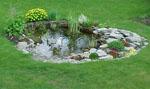 I dammen växer näckros 2 sorter, iris, kaveldun, blomstervass och några gröna växter som jag inte vet namnet på.
