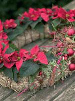 Gör en krans av halm som hålls ihop av linneband. Plantera minijulstjärnorna asymmetriskt i halmen, så att den runda formen bryts. Resten av julgruppen består av färgade pinnar, kulor, kottar och enbär.