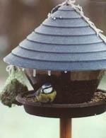 Glöm inte att mata småfåglarna!