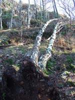 Fallna storheter i Arboretet
