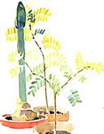 Världen har kommit närmare! Även på krukväxtfronten. Numera finns de mest exotiska växter i blomsterhandeln och vi kan alla skapa små grönskande tropiker på fönsterbrädan.