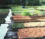 Plantskola utanför Warszawa - bilden är av deras sortiment av fetbladsväxter.