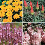 'First Year Flowering Perennial Collection'