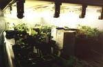 Men ljuset räcker ju inte så här års för de spirande plantorna, därför måste man ordna tillskottsljus i form av en lysrörslampa.