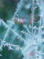 Frost hemma