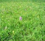 Den naturliga förebilden ängen består inte bara av gräs utan av en massa växter som lever i jämvikt med varandra och blir därigenom stabil.