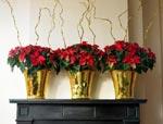 Arrangera dina julstjärnor i en grupp om tre och dekorera med guldsprayade kvistar.