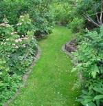 Grönytor tar över för vidare transport, den hålls i schack med gräsklipparen och trimmern.