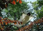 Hängmatta i trädet
