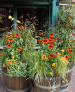 Höstglad plantering i ekfat