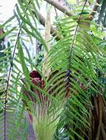 Vad döljer sig i djungeln