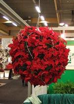 Julstjärneboll (Mäster Grön)