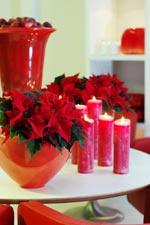 Röda julstjärnor i höga, blanka röda keramikkrukor blir en livfull dekoration.