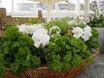 Lyxiga kryddväxter