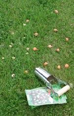 Lökjärn kan vara till god hjälp vid plantering av naturlökar i gräsmattan.