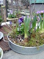Möt våren med lökar