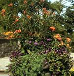 En annan urna innehöll en något liknande färgkombination men med helt andra växter.