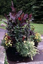 De innehåller växter med svarta blommor kombinerad med olika sorters bladverk i dunkelt svartrött och purpur.