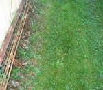I skuggan bakom huset tar oftast mossan över. Gräset kan inte konkurrera.