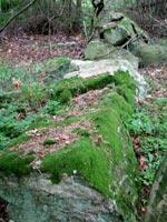 Mossa på sten