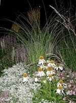 Nattligt gräs
