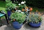 Plantera urnor, krukor och amplar.