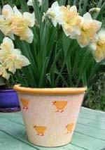 Om du råkar ha en kul kruka, så varför inte göra en enkel plantering i den! I bilden är det Narcissus 'Eastern Bonnet' i en påskpippikruka.