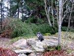 Här var det stormen Per som hjälpte till med gallringen! Katten Pinglan inspekterar vad som hänt med spangranen vid fågelmatningen.