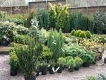 Plantskolebesök