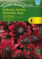 Rudbeckia hirta var. pulcherrima 'Cherry Brandy', sommarrudbeckia