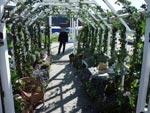 Särö Trädgårds glaslöst växthus