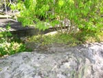 Till buskarna har skrevorna förbättrats med natursten och cement för att kunna rymma mer jord och därmed vatten.